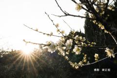 c7ad9579-梁正宏-dsc00996-2020.02.04