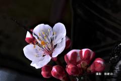 d39b949a-徐建功-shu_5973