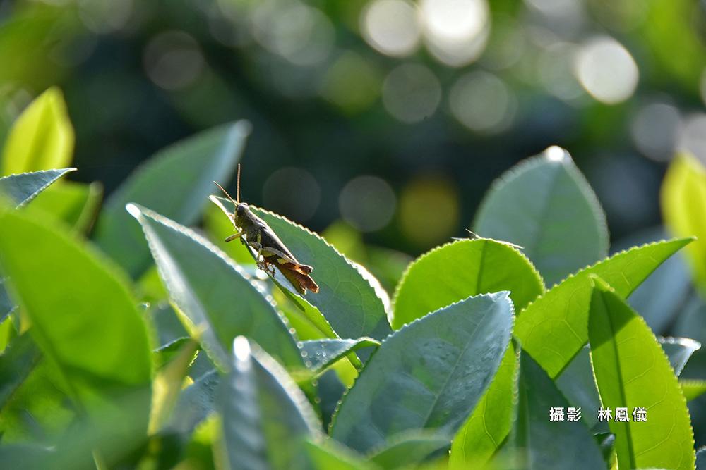 林鳳儀FEN_4965m