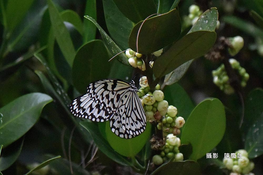 陳慶雄-DSC_53160