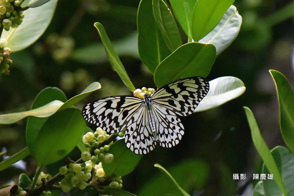 陳慶雄-DSC_53380