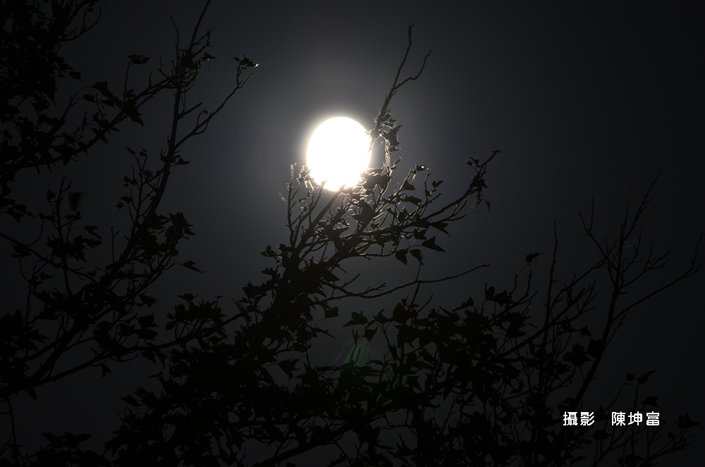 陳坤富DSC_7752