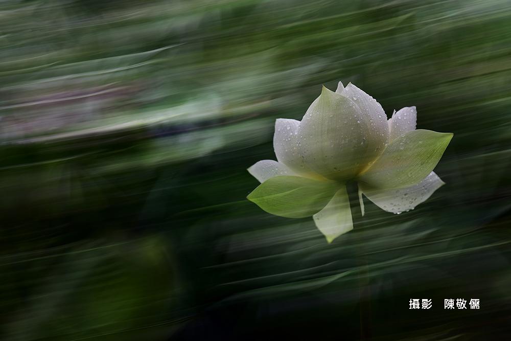 陳敬儒20190814_2167荷必匆匆-疾風勁荷M