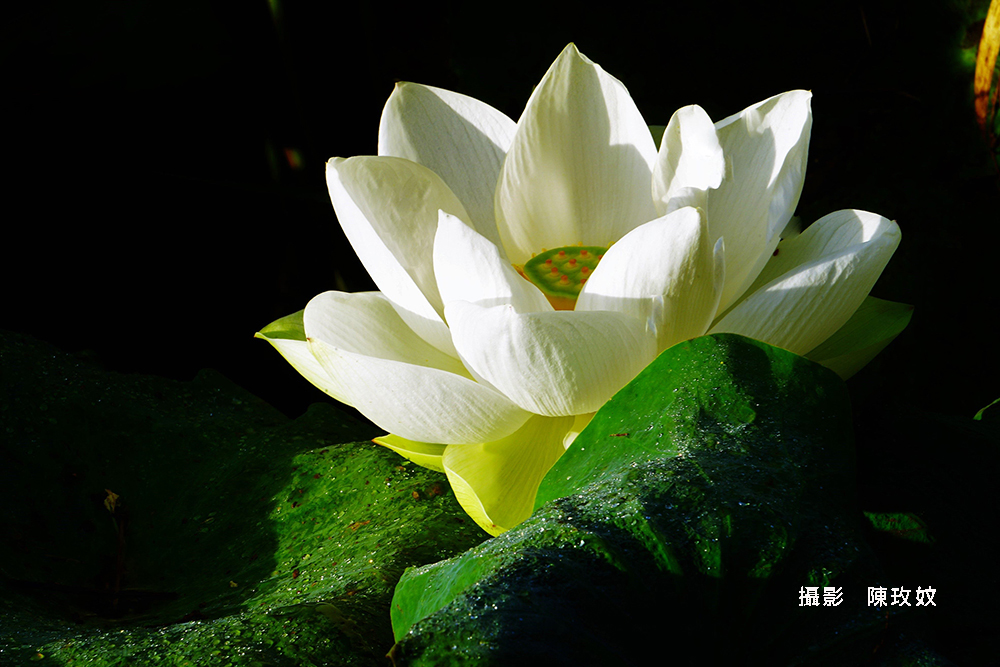6e1827a4-陳玫妏6000_n