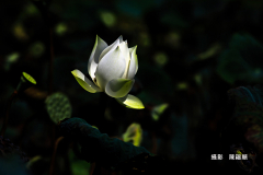 39b36760-陳福順img_2695