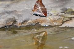 吳英助-蝴蝶-3