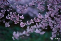 呂艷芳_Q0A2989拷貝