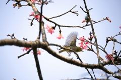陳福順IMG_1597-01