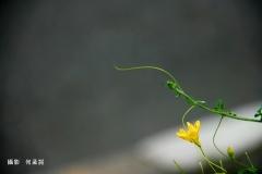 180805-員山健走拍-景-孟詞 (14)