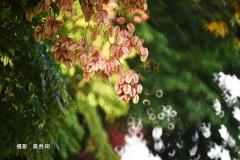 5b572b0c-黃秀琍dsc_7572