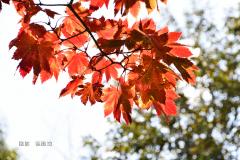 6689435a-徐建功-shu_2489