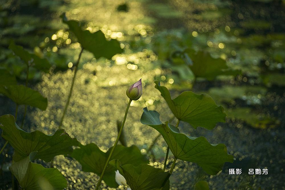 呂艷芳_Q0A5610
