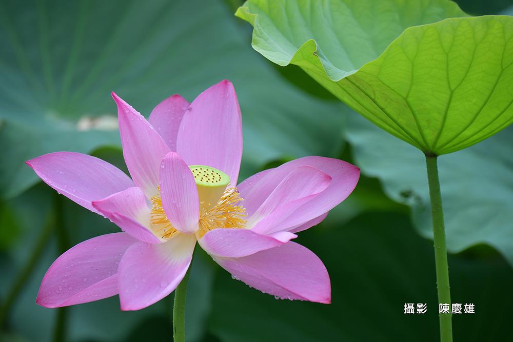陳慶雄DSC_8112