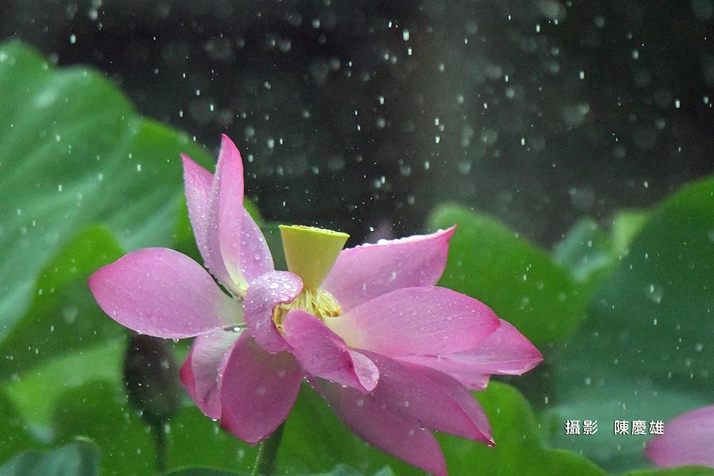 陳慶雄DSC_813100