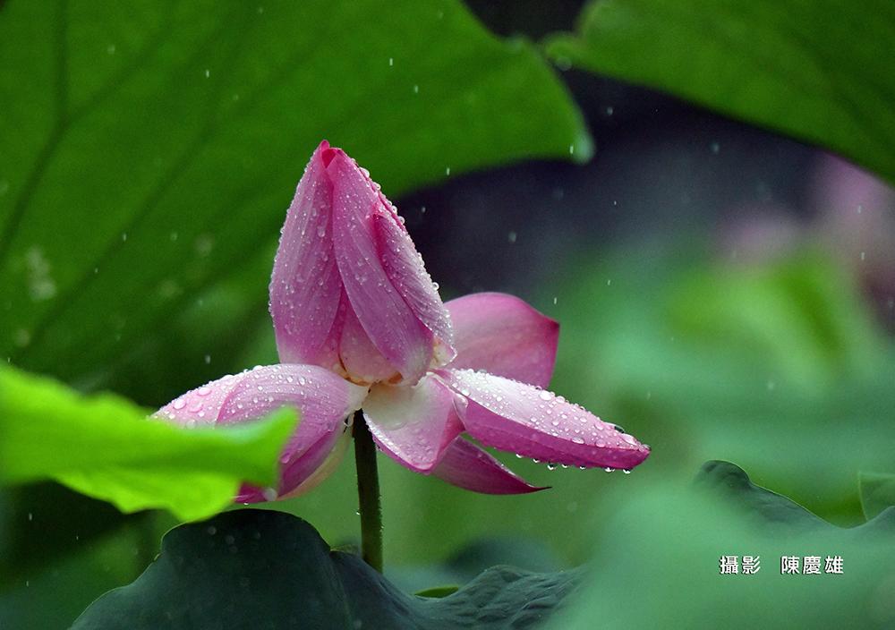 陳慶雄DSC_818000
