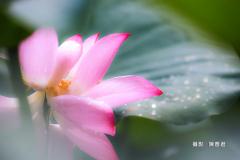 金色雨滴-陳香君 (3)