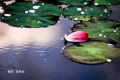 金色雨滴-陳香君 (5)