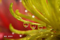 黃秀琍DSC_0645