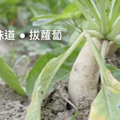 《 童年的味道●拔蘿蔔 》